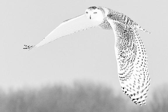 Les oiseaux - Chouette a dessiner ...